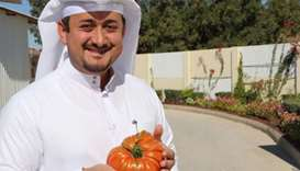 Nasser al-Khalaf shows the 1.34kg organic tomato.