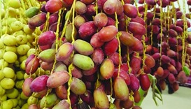 Ministry of Municipality & Environment conducts studies to improve quality & quantity of local dates